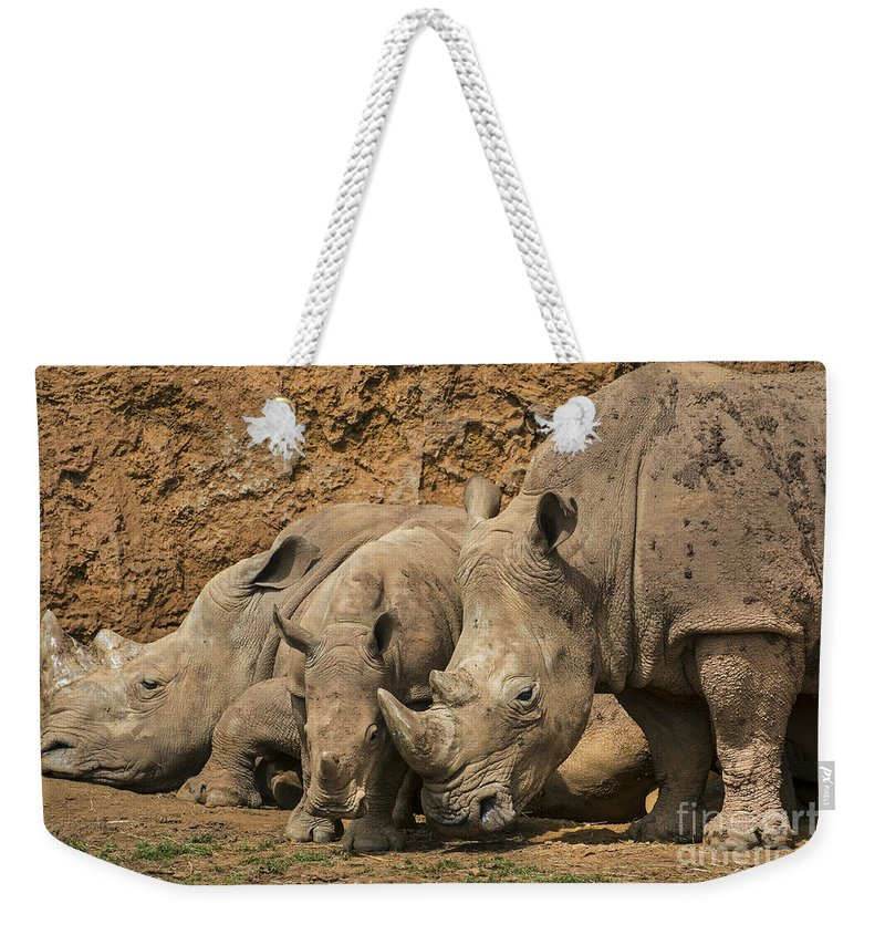 White Rhino Weekender Tote Bag featuring the photograph White Rhino 3 by Arterra Picture Library