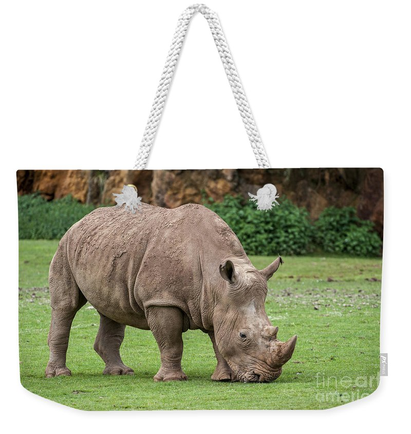 White Rhino Weekender Tote Bag featuring the photograph White Rhino 5 by Arterra Picture Library
