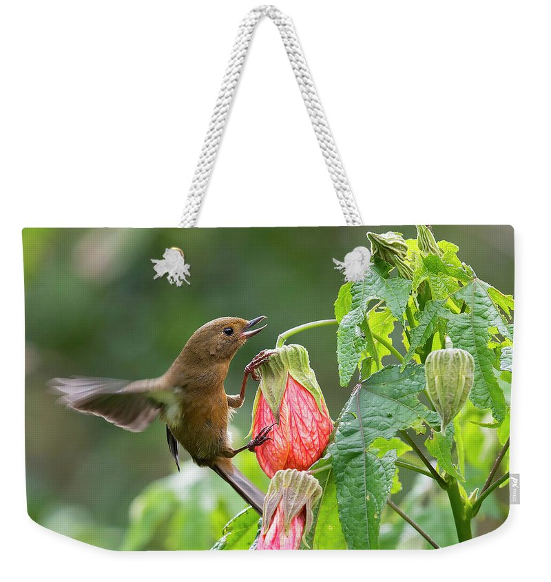 Birds Weekender Tote Bag featuring the photograph White-sided Flowerpiercer by Juan Jose Arango