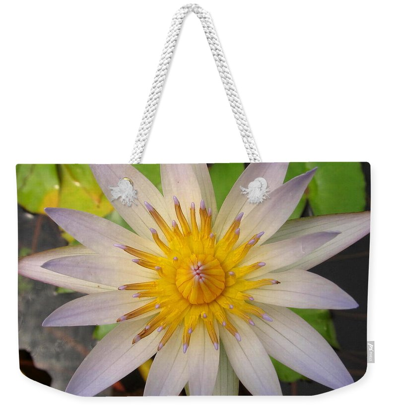 White Star Lotus White Lotus Flower Aquatic Flowers Aquatic Flora Aquatic Plants Water Garden Flora Pond Plants White Water Lily Lotus Blooms Lotus Blossoms Divine Design In Nature Rare Flowers Exotic Flora Beautiful Being Weekender Tote Bag featuring the photograph White Star Lotus by Joshua Bales