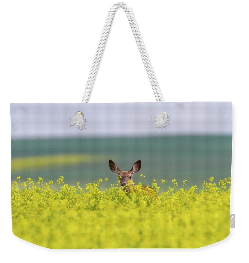 Alertness Weekender Tote Bag featuring the photograph White-tailed Doe by Ed Matuod
