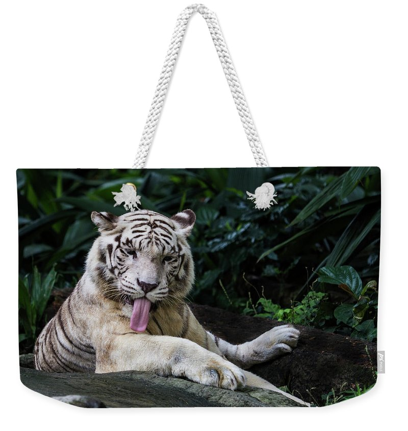 White Tiger Weekender Tote Bag featuring the photograph White Tiger by Manoj Shah
