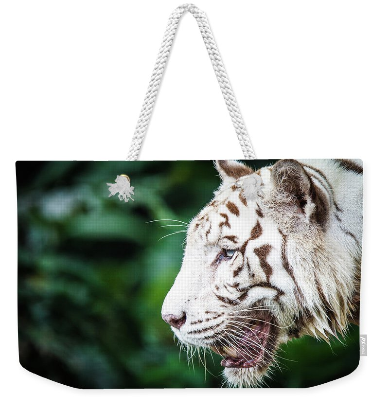 Snarling Weekender Tote Bag featuring the photograph White Tiger by Tony Kh Lim