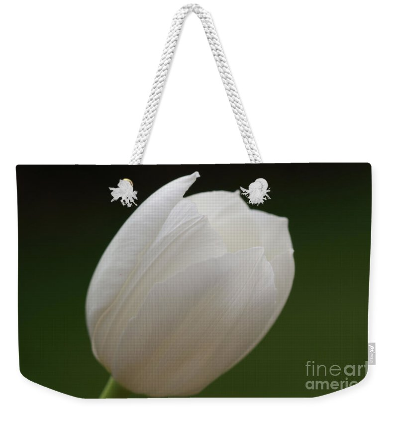 White Weekender Tote Bag featuring the photograph White Tulip 4 by Carol Lynch