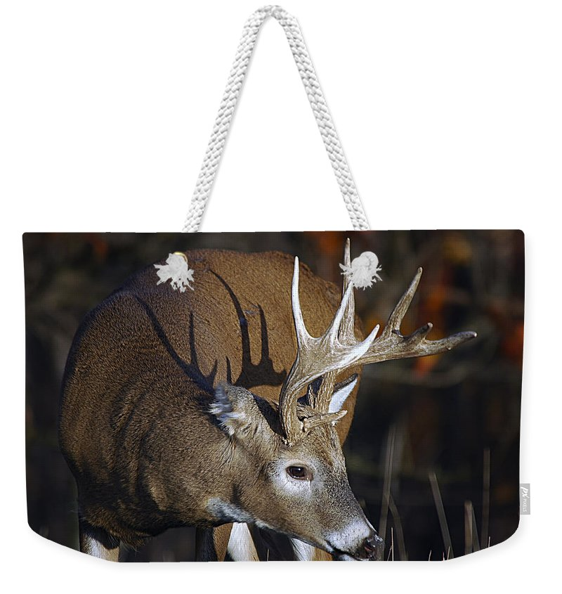 Whitetail Weekender Tote Bag featuring the photograph White-tailed Deer Antler Shadow by Timothy Flanigan