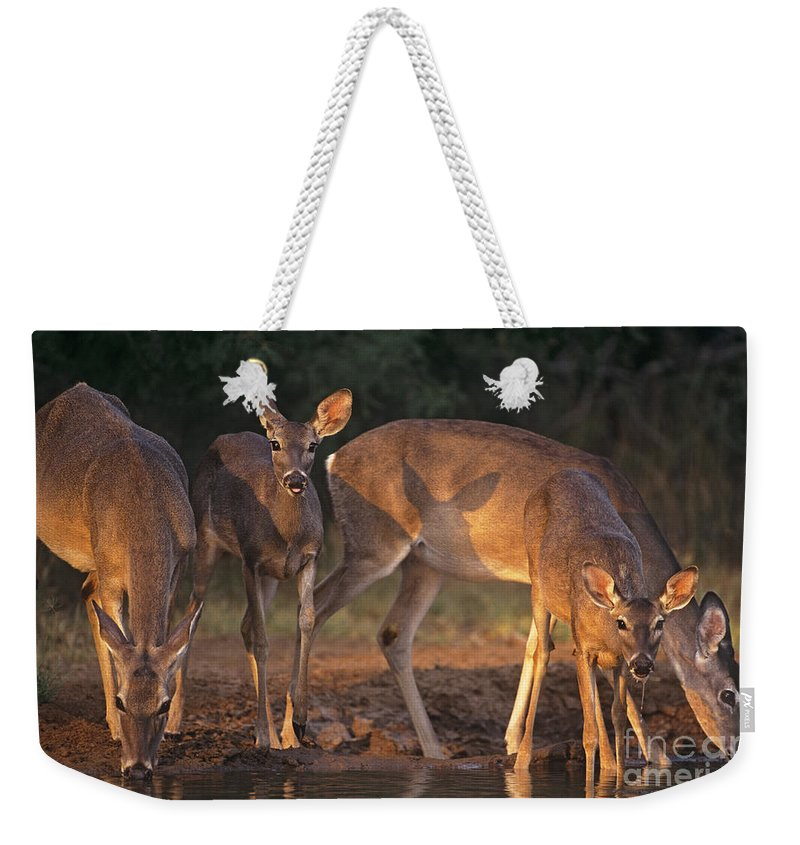 North America Weekender Tote Bag featuring the photograph Whitetail Deer At Waterhole Texas by Dave Welling