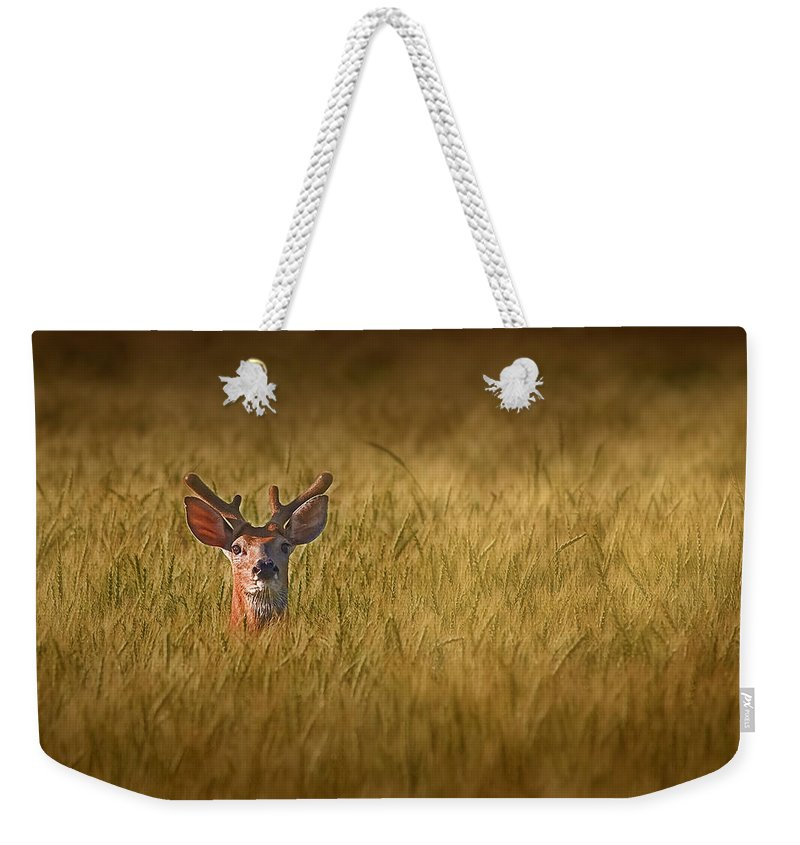 Designs Similar to Whitetail Deer In Wheat Field