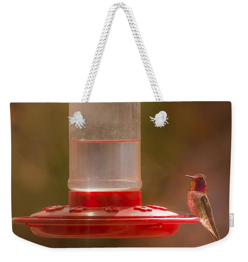 Anna's Hummingbird Weekender Tote Bag featuring the photograph Who Is Watching Who by Onyonet Photo Studios
