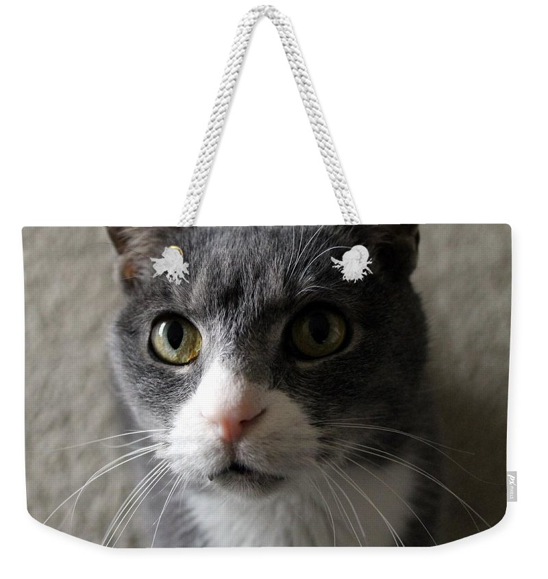 Cat Weekender Tote Bag featuring the photograph Who Me by Wendy Gertz