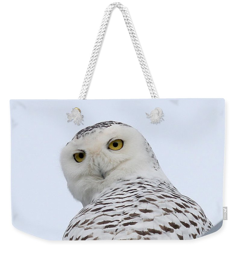 Maine Wildlife Weekender Tote Bag featuring the photograph Who You Lookin' At? by Sharon Fiedler