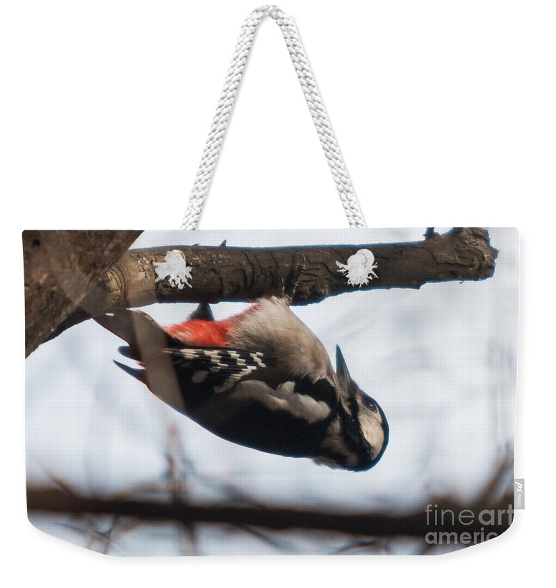 Birds Weekender Tote Bag featuring the photograph Who's Hiding Here by Jivko Nakev