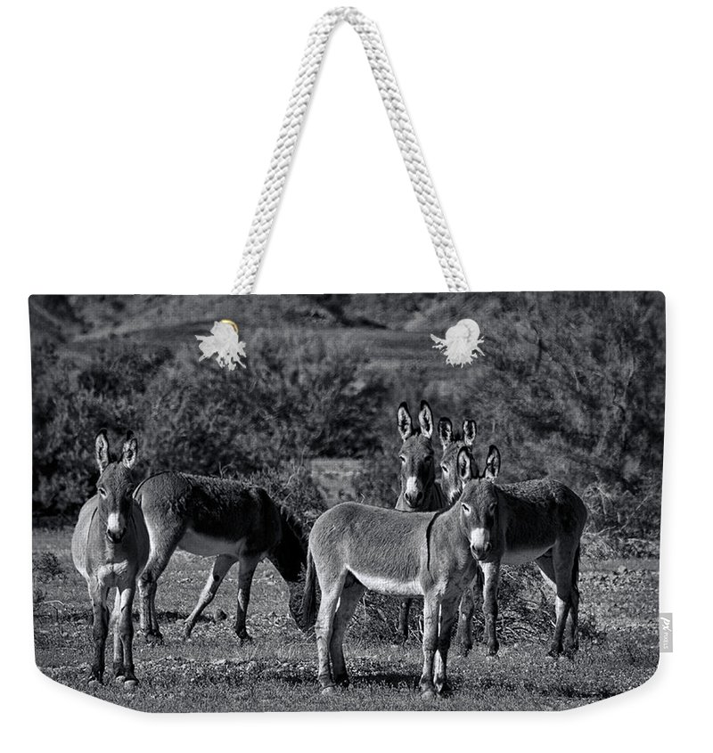Wild Burros Weekender Tote Bag featuring the photograph Wild Burros In Black And White by Saija Lehtonen