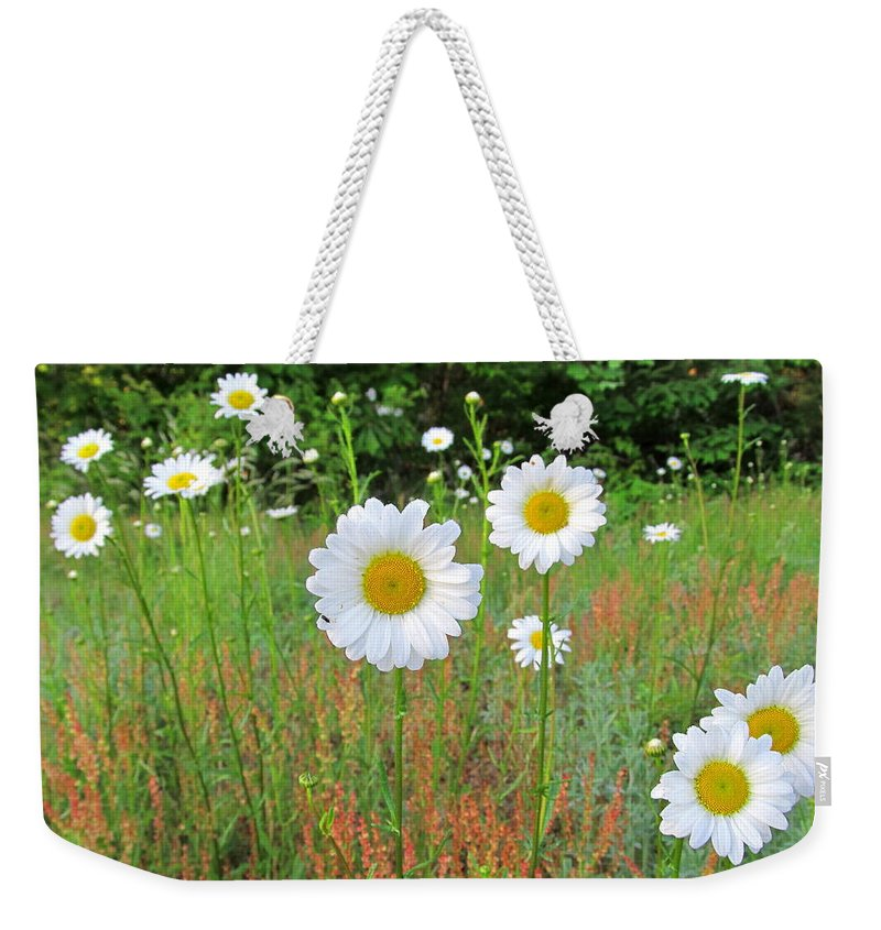 White Flowers White Daisies Wild Daisy Photographs White And Yellow Wildflower Prints Native Flora Wild Flora Forest Flora Images Wild Meadow Flowers Beautiful Blooms Protect Endangered Ecosystems Wild Grasslands North American Wildflowers Prints Rare Nature Pictures Natural Beauty Flowerscapes Floral Landscapes Natural Landscapes Natural Concentric Design Maryland Parks Biodiversity Organic Farms Only Fine Art America Daisy Field Of Daisies Living Color Weekender Tote Bag featuring the photograph Wild Daisies by Joshua Bales
