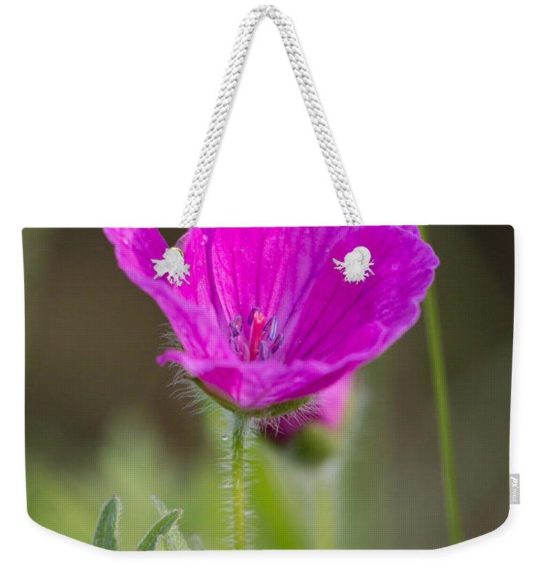 Bloody Cranesbill Weekender Tote Bag featuring the photograph Wild Flower Bloody Geranium by Jivko Nakev