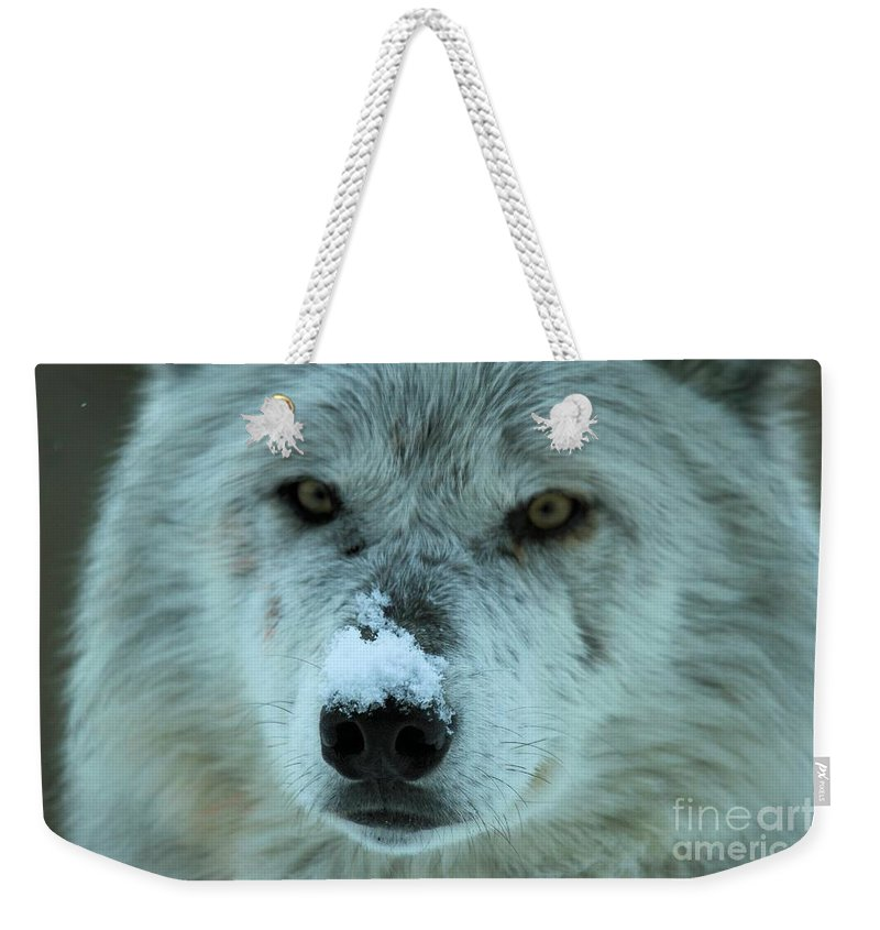 Alpha Wolf Weekender Tote Bag featuring the photograph Wild Intensity by Adam Jewell