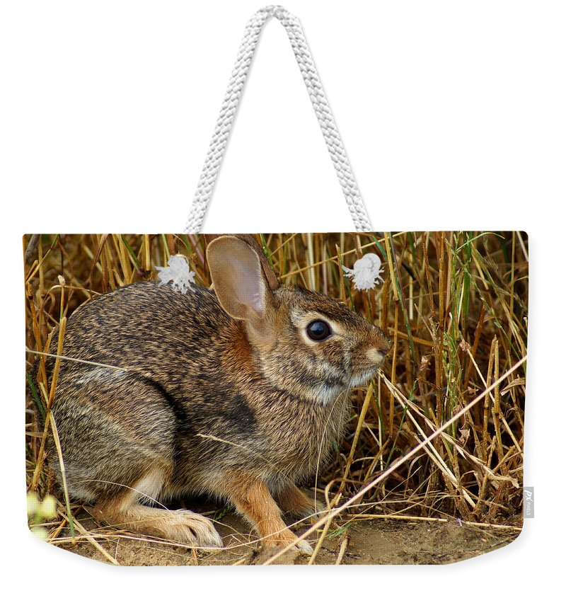 Wild Rabbit Weekender Tote Bag featuring the photograph Wild Rabbit by Kim Pate