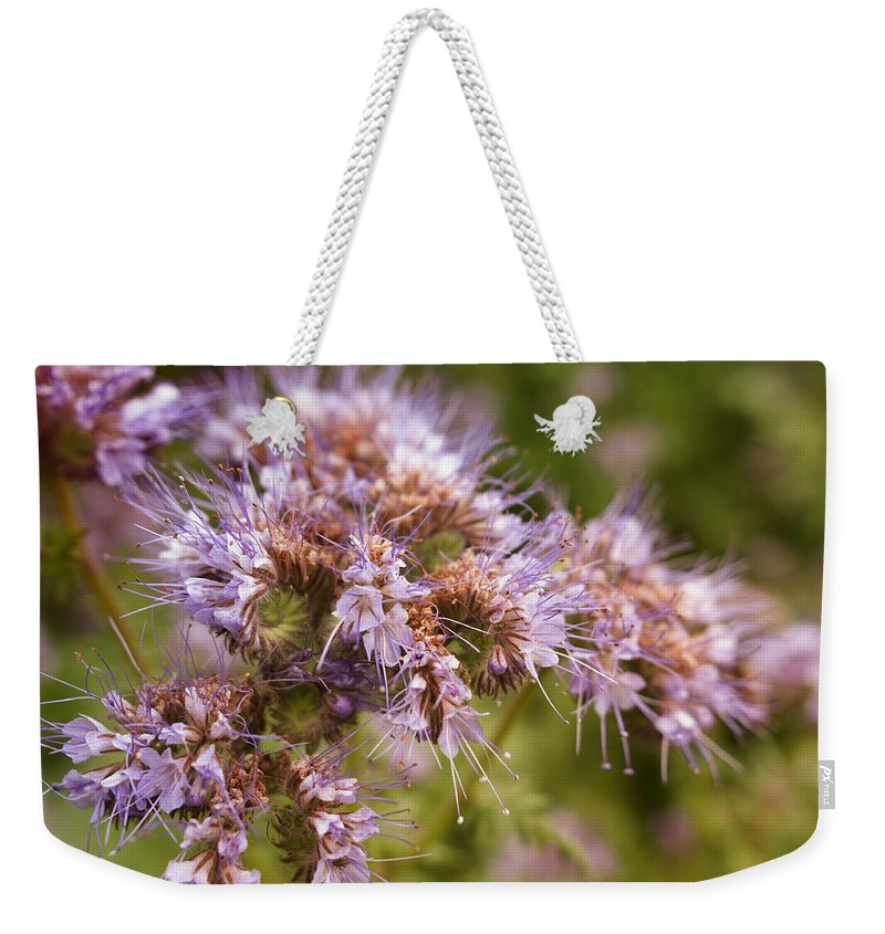 Flowers Weekender Tote Bag featuring the photograph Wild Violet by Miguel Winterpacht