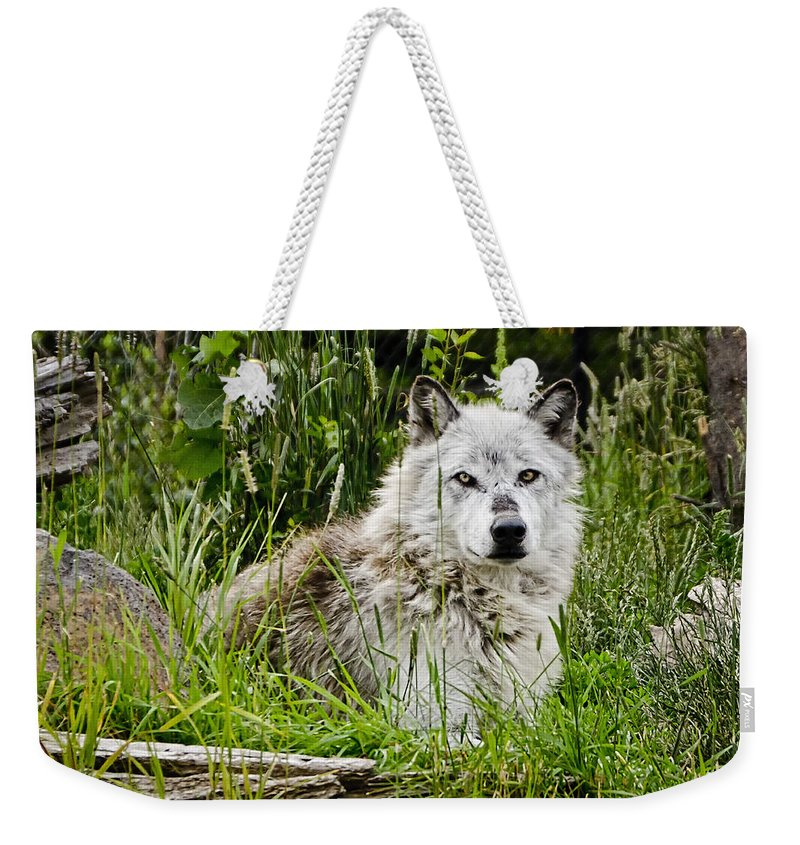 Wolf Weekender Tote Bag featuring the photograph Wild Wolf by Jon Berghoff