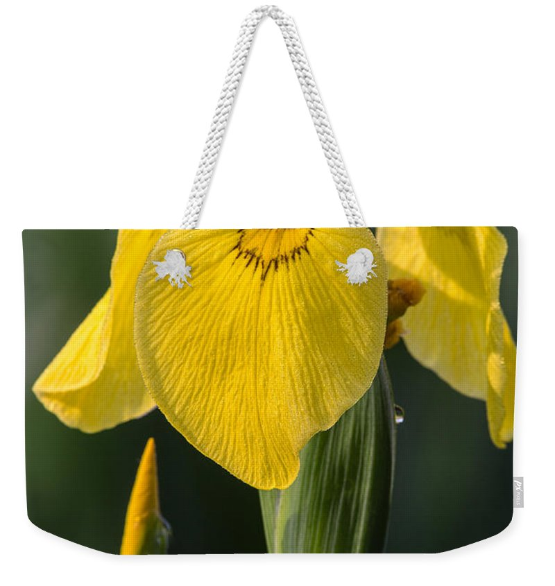 Wild Yellow Iris Weekender Tote Bag featuring the photograph Wild Yellow Iris by Dale Kincaid