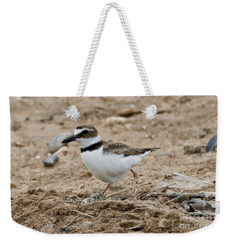 Wilson's Plover Weekender Tote Bag featuring the photograph Wilsons Plover At Nest by Anthony Mercieca