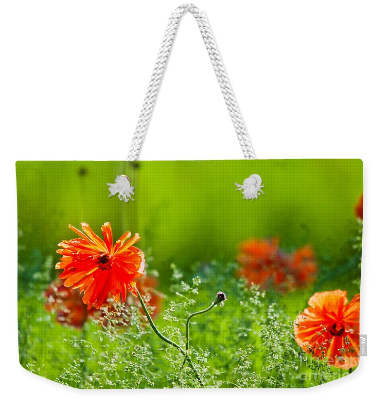 Oriental Poppies Weekender Tote Bag featuring the photograph Windblown Poppies by Cheryl Baxter