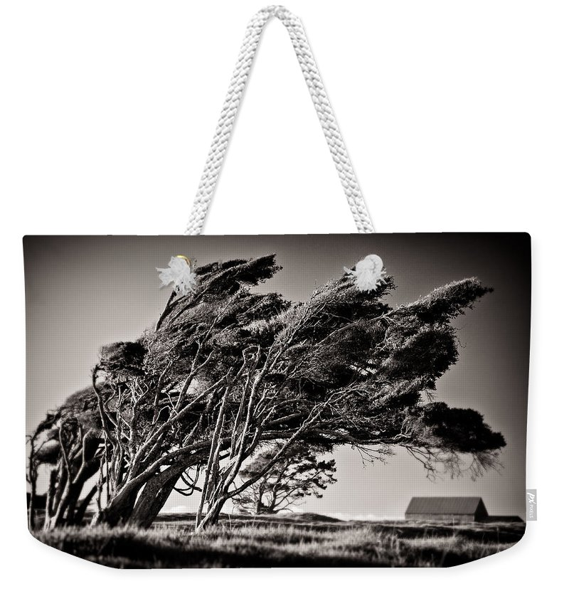 Windswept Trees Weekender Tote Bag featuring the photograph Windswept by Dave Bowman