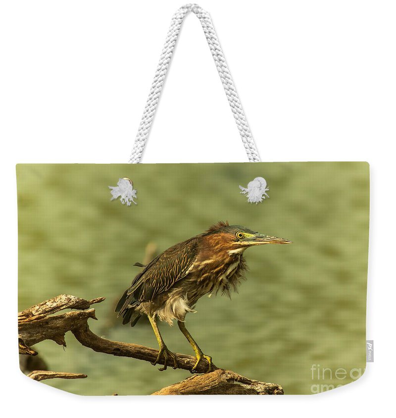 Heron Weekender Tote Bag featuring the photograph Windy Morn Green Heron by Robert Frederick