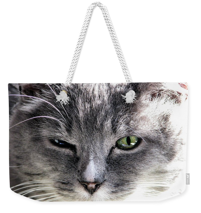 Animals Weekender Tote Bag featuring the photograph Wink by Rory Sagner