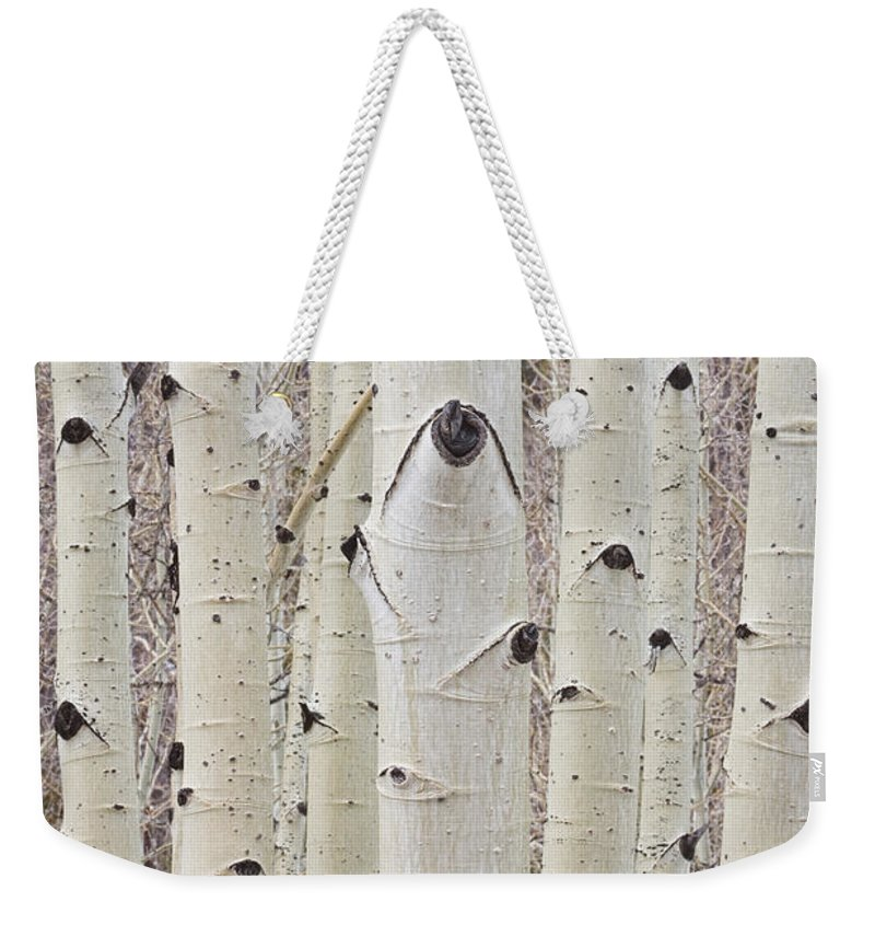Tree Weekender Tote Bag featuring the photograph Winter Aspen Tree Forest Portrait by James BO Insogna