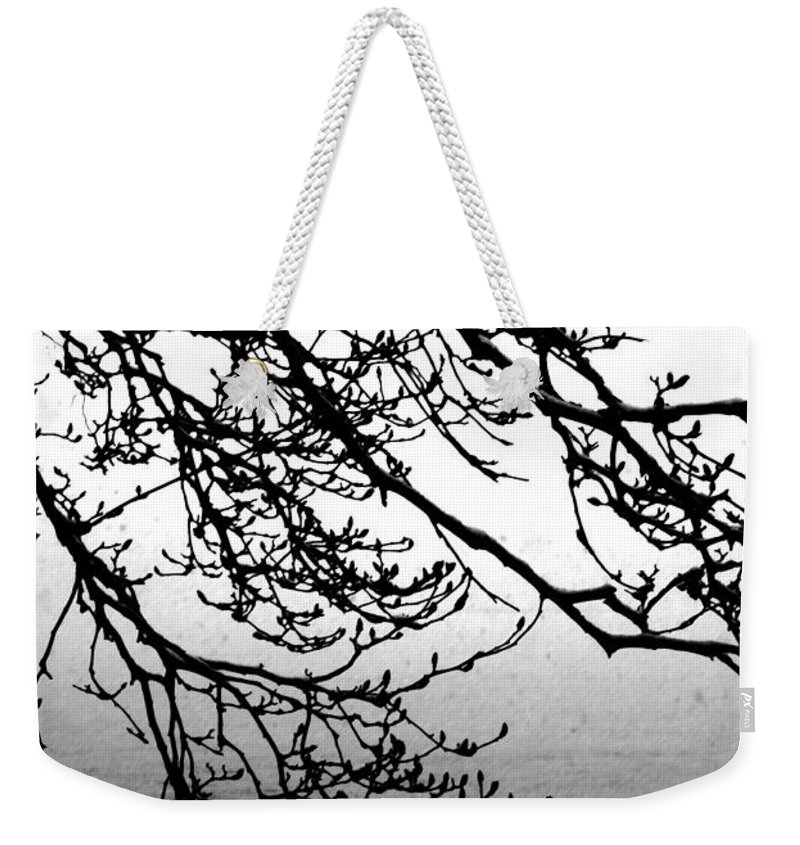Magnolia Tree Weekender Tote Bag featuring the photograph Winter Magnolia by Valoree Skiles