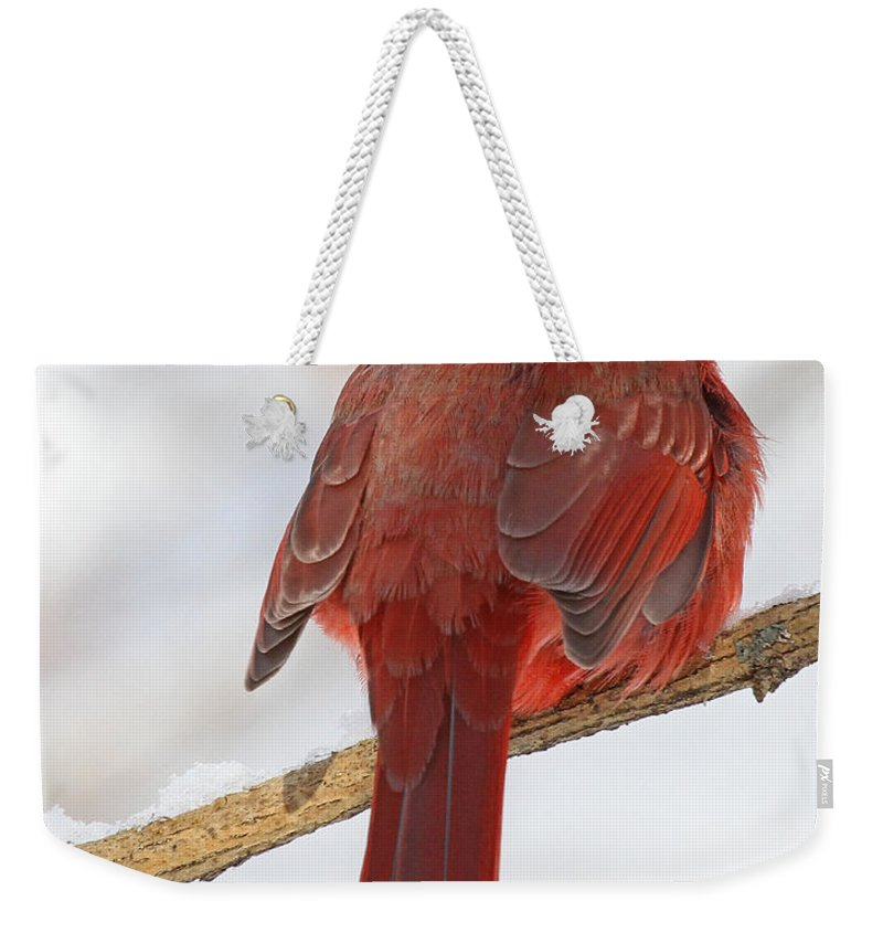 Birds Weekender Tote Bag featuring the photograph Winter Northern Cardinal by Mike Dickie