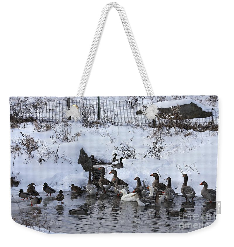 Winter Weekender Tote Bag featuring the photograph Winter Swimming Hole by Deborah Benoit