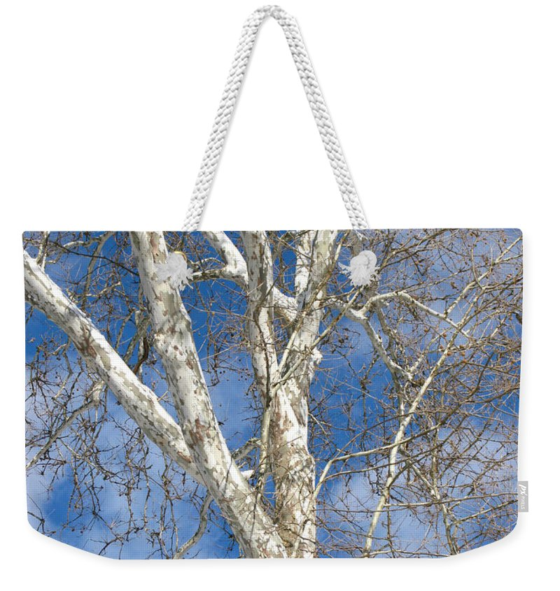 Winter Weekender Tote Bag featuring the photograph Winter Sycamore by Ann Horn