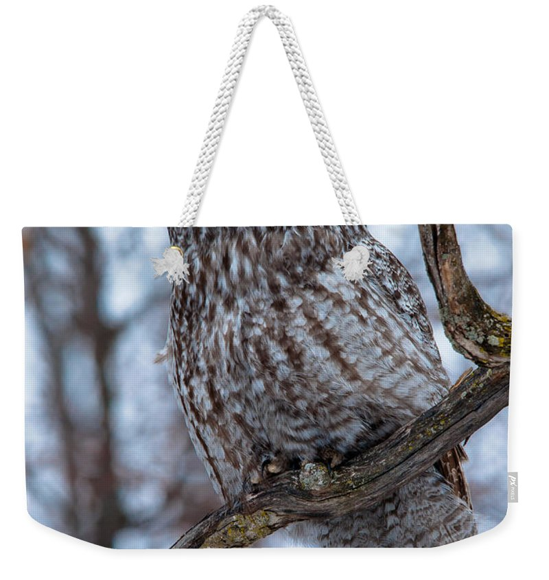 Owls Weekender Tote Bag featuring the photograph Wisdom by Cheryl Baxter