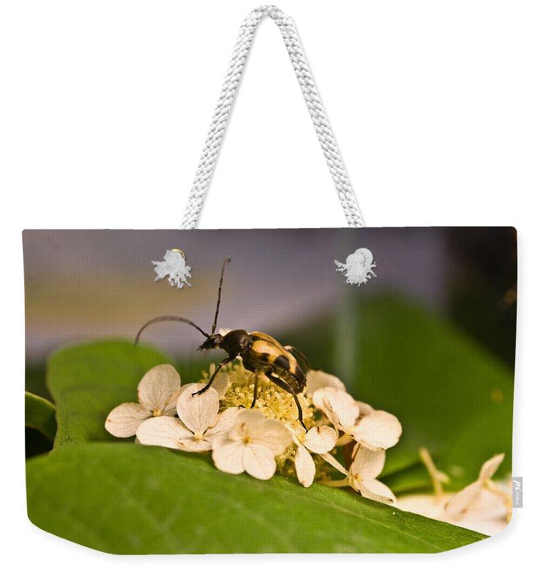 Beetle Weekender Tote Bag featuring the photograph Wise Beetle by Douglas Barnett