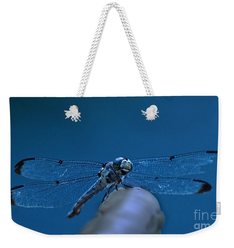 Jemmy Archer Weekender Tote Bag featuring the photograph With A Broken Wing by Jemmy Archer