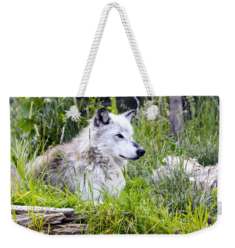 Wolf Weekender Tote Bag featuring the photograph Wolf In The Grass by Jon Berghoff