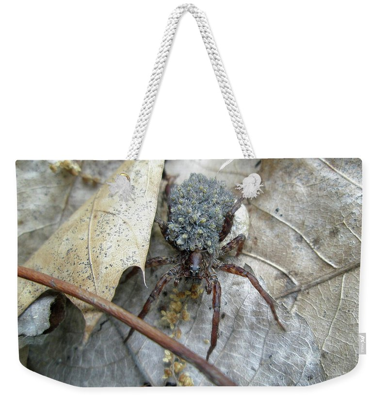 Spider Weekender Tote Bag featuring the photograph Wolf Spider And Spiderlings by Mother Nature