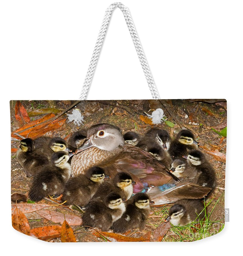 Animal Weekender Tote Bag featuring the photograph Wood Duck Aix Sponsa by Millard H. Sharp