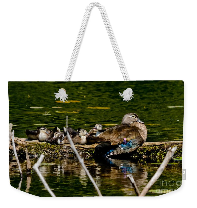 Wood Ducks Weekender Tote Bag featuring the photograph Wood Duck Rest Time by Cheryl Baxter