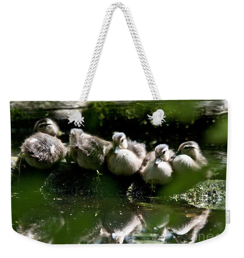 Wood Ducks Weekender Tote Bag featuring the photograph Wood Ducklings On A Log by Cheryl Baxter