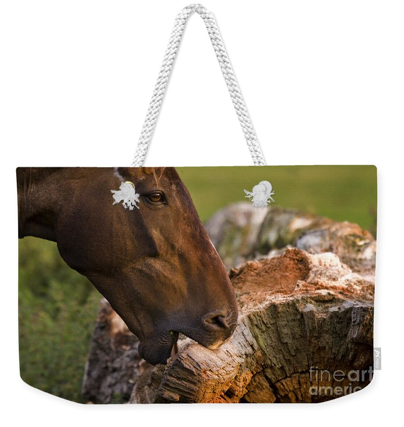 Pony Weekender Tote Bag featuring the photograph Wood Eater by Angel Ciesniarska