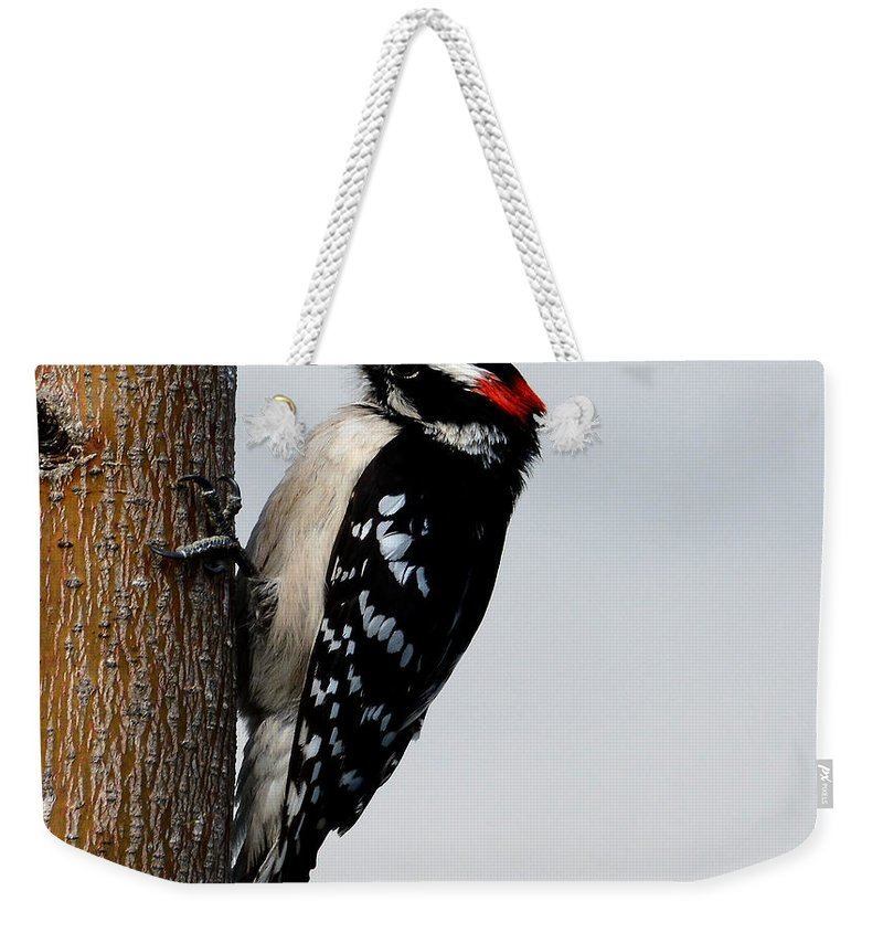 Wood Pecker Weekender Tote Bag featuring the photograph Wood Pecker by Todd Hostetter