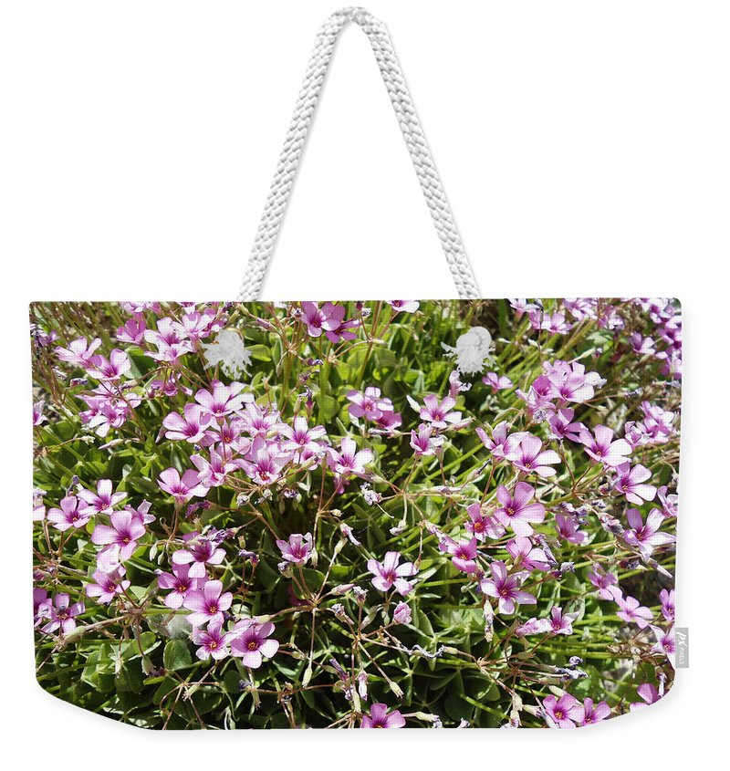 Wood Sorrel Weekender Tote Bag featuring the photograph Wood Sorrel by Lovina Wright