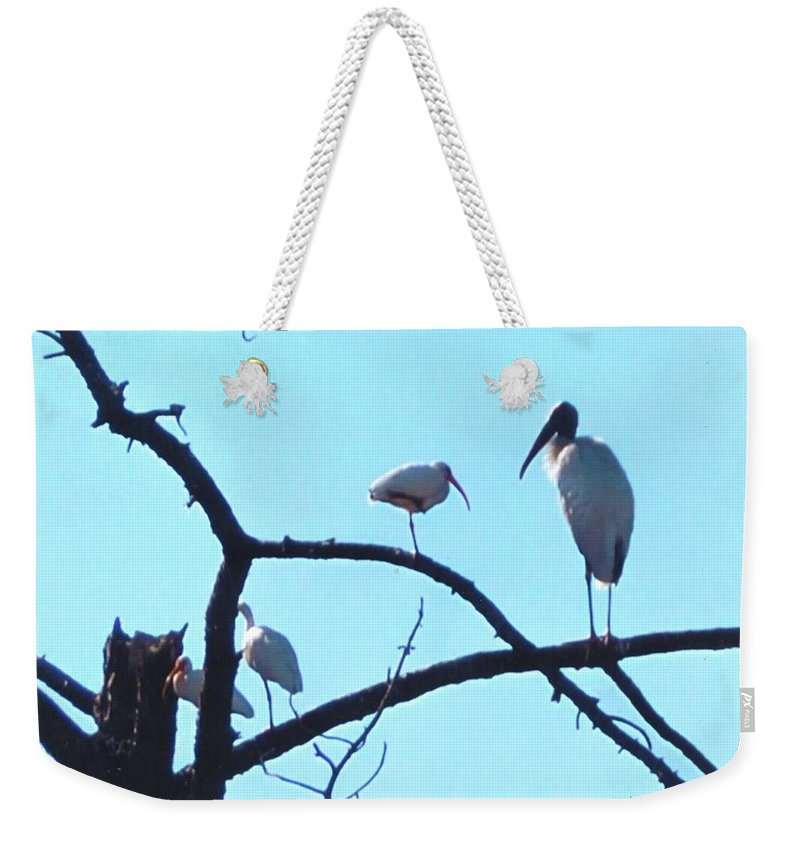 Sharing Tree Perch In N.ft.myers Weekender Tote Bag featuring the photograph Wood Stork And Ibis by Robert Floyd