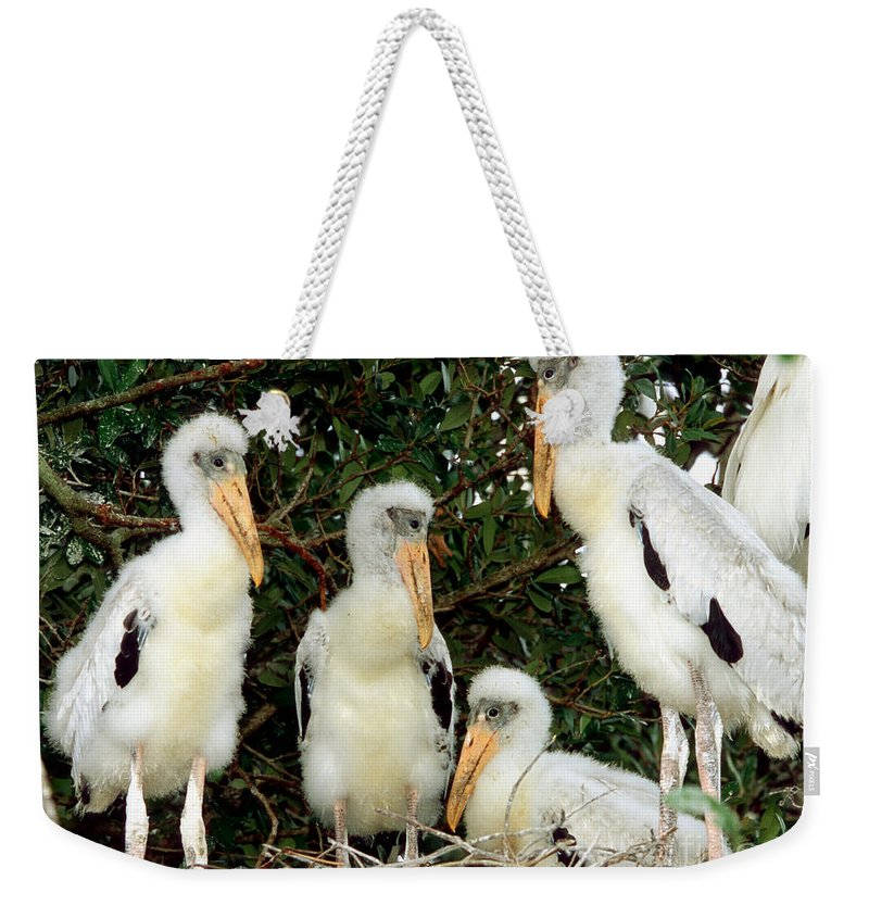 Animal Weekender Tote Bag featuring the photograph Wood Stork Young In Nest by Millard H. Sharp