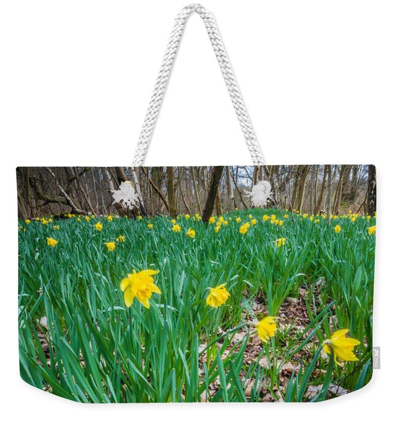 Dawn Oconnor Weekender Tote Bag featuring the photograph Woodland Daffodils by Dawn OConnor