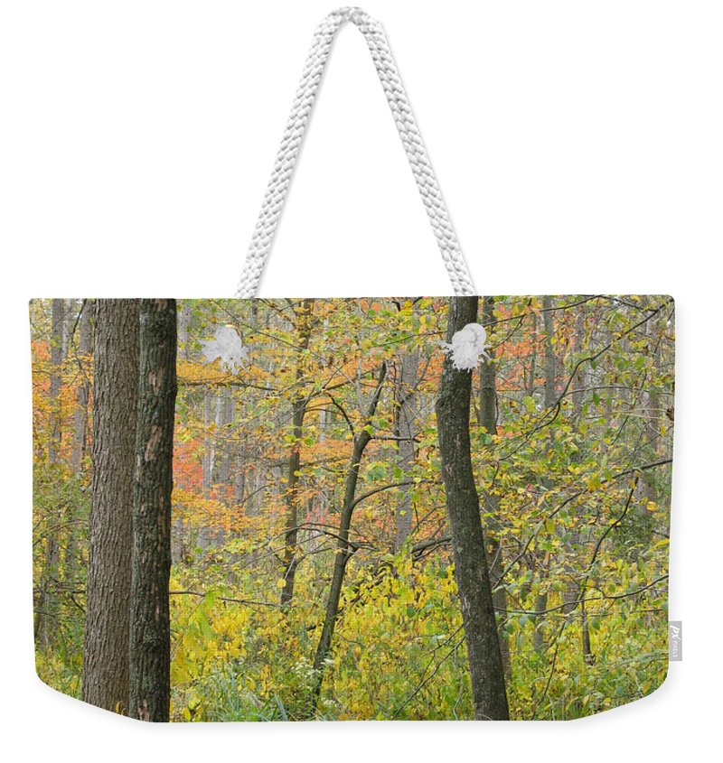 Autumn Weekender Tote Bag featuring the photograph Woodland Interior by Ann Horn