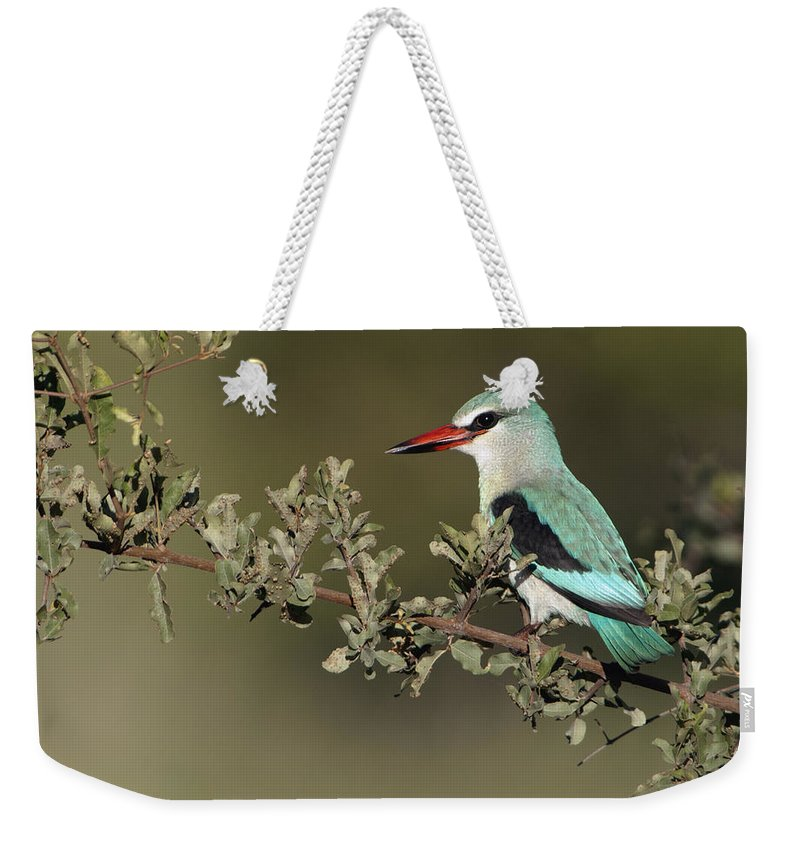 Nis Weekender Tote Bag featuring the photograph Woodland Kingfisher Kruger Np South by Alexander Koenders