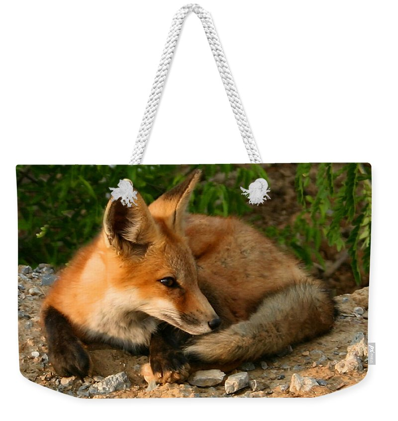 Red Fox Weekender Tote Bag featuring the photograph Worn Out From Chasing Squirrels by Kristin Elmquist